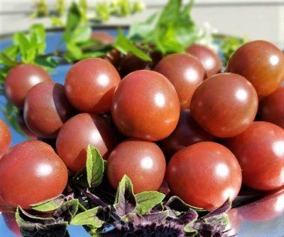 Black Cherry, Kirschtomate mit besonderem Aroma