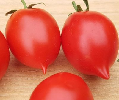 Italienische Wintertomate, samenfestes Saatgut, Tomate mit Geschmack
