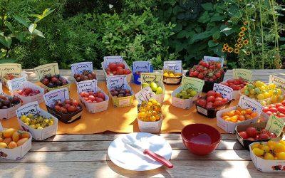Tomatenverkostung 2020 – Tomaten mit dem besten Aroma