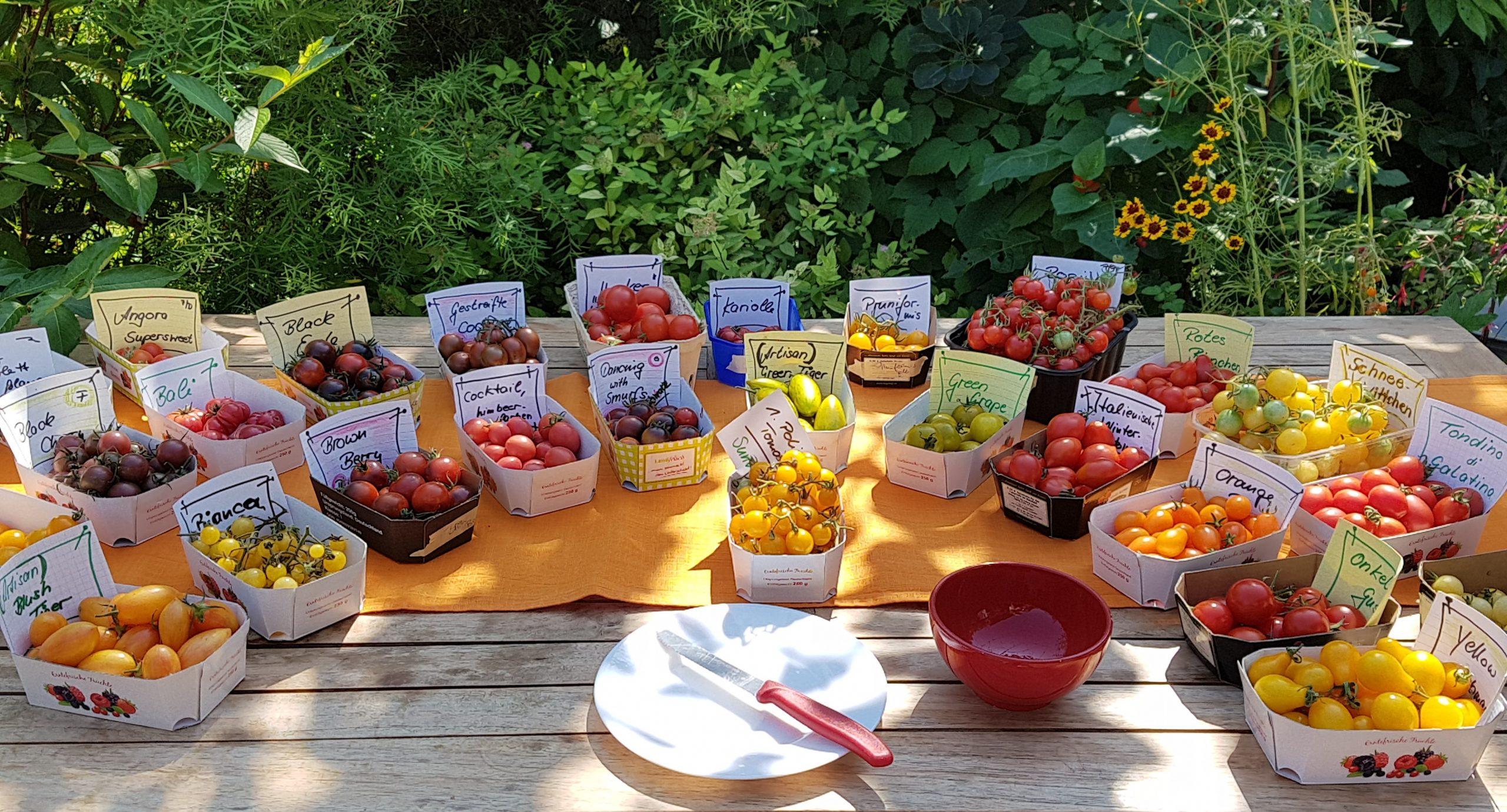 Tomatenverkostung bei Tomaten aus Kurpfalz