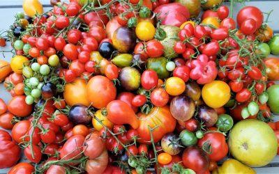 Tomatenschwemme? – Tomaten schnell verarbeiten