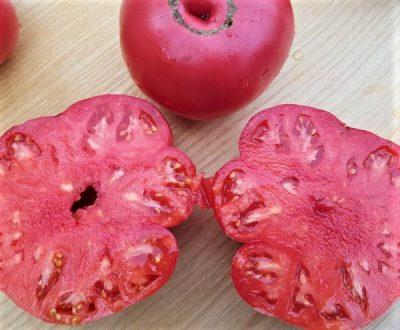 Butz German Fruchtfleisch rosa, samenfest