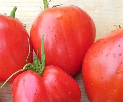 Französische Ochsenherz Tomate