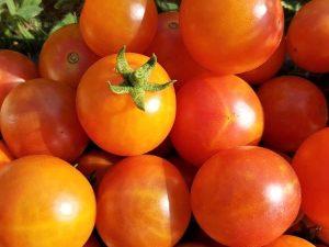 Isis Candy Cocktail Tomate, Tomaten aus Kurpfalz