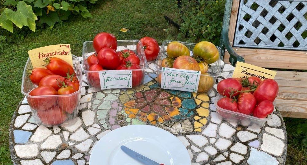 Tomatenverkostung, Tomaten aus Kurpfalz, samenfestes Saatgut