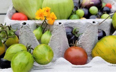 Tomatensaison verlängern bis Dezember