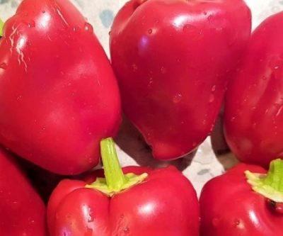 Paprika Apple Sweet Pimiento, roter Gemüsepaprika
