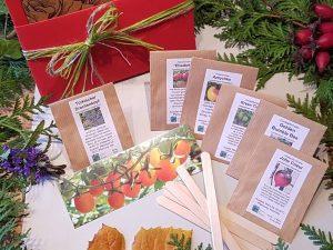Geschenkidee für Gärtner, Tomaten Set zum Auswählen