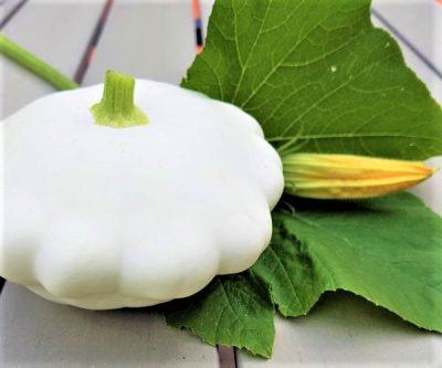 Kürbis White Custard mit Blüte