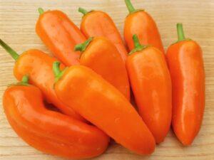 Paprika Sweet Bite Ophelia, orangener Snack-Paprika
