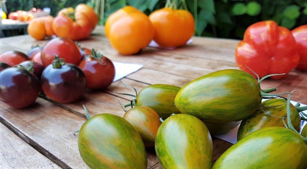 Tomatenverkostun 2021 mit Vortrag